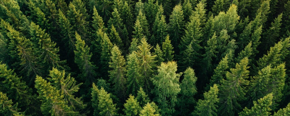 forest-tree-planting-carbon-offsetting-insetting